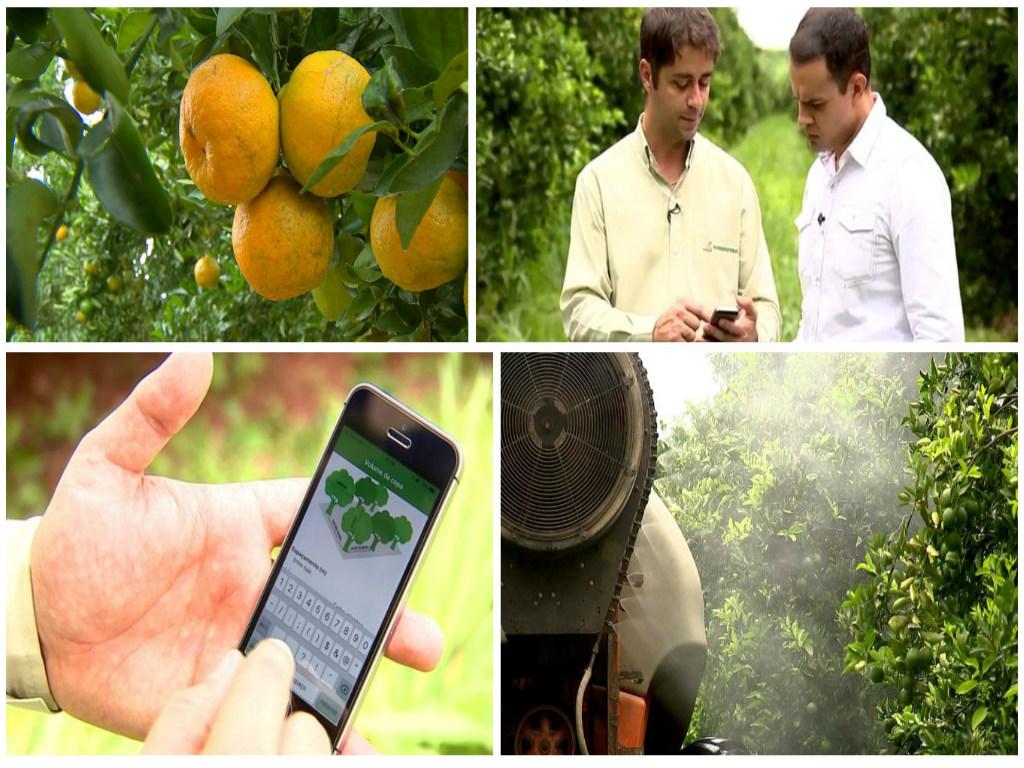 Aplicação móvel ajuda a plantar em pomares de citros em Rio de Janeiro